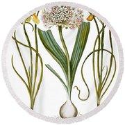 Leek And Irises, 1613 Round Beach Towel