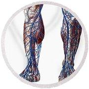 Leg Blood Vessels, Anatomical Round Beach Towel