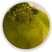 Lenten Rose Interior Round Beach Towel