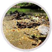 Leopard Frog Landing Round Beach Towel