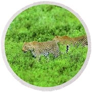 Leopard On The Move Round Beach Towel