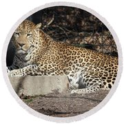 Leopard Relaxing Round Beach Towel