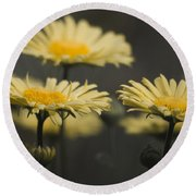 Leopards Bane Desaturated Round Beach Towel