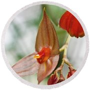 Lepanthes Maduroi Orchid Round Beach Towel