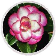 Leslie Ann - Sasanqua Camellia 007 Round Beach Towel