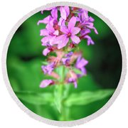 Lesser Purple Fringed Orchid Round Beach Towel
