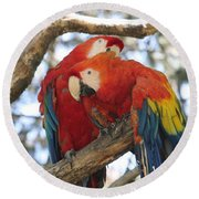 Let Me Get It - Scarlet Macaws Round Beach Towel