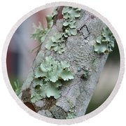 Lichens 2 Round Beach Towel