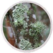 Lichens 4 Round Beach Towel