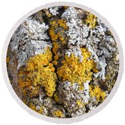 Lichens On Tree Bark Round Beach Towel