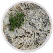 Life On Bare Rock - Pockmarked Limestone And Thyme Round Beach Towel