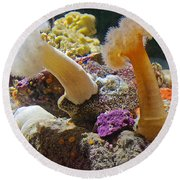 Life Under The Sea In Monterey Aquarium-california Round Beach Towel