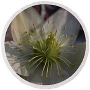 Light And Shadow Hellebore Flower Round Beach Towel