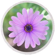 Light Purple Gazania Macro 1  Round Beach Towel