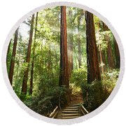 Light The Way - Redwood Forest Of Muir Woods National Monument With Sun Beam. Round Beach Towel by Jamie Pham