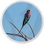 Lilac Breasted Roller 5 Round Beach Towel
