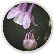 Lilac Columbine 3 Round Beach Towel