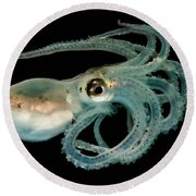 Lilliput Longarm Octopus Round Beach Towel