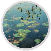 Lilly Pad In Pond  Round Beach Towel