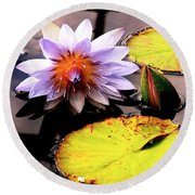 Lillypad In Bloom Round Beach Towel