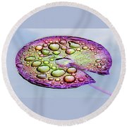 Lillypad Round Beach Towel