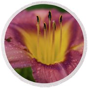 Lily Bloom Close Up Round Beach Towel