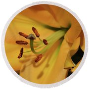 Lily Close Up Round Beach Towel