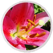 Lily Flower Pink Lilies Giclee Art Prints Baslee Troutman Round Beach Towel