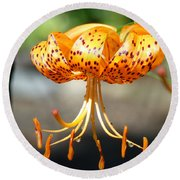 Lily Flowers Art Orange Tiger Lilies Giclee Baslee Troutman Round Beach Towel