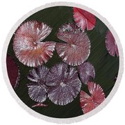 Lily Pads In The Pond Round Beach Towel