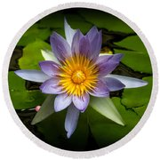 Lily Queen Of The Pond  Round Beach Towel