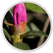Lily Ready To Bloom Round Beach Towel