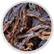 Limber Pine Roots Round Beach Towel