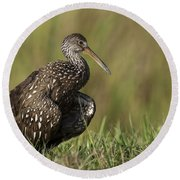 Limpkin Stretching In The Grass Round Beach Towel