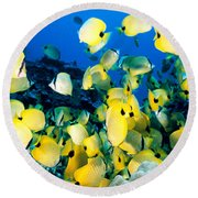 Lined Butterflyfish Round Beach Towel