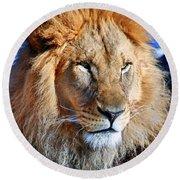 Lion 09 Round Beach Towel
