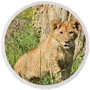 Lion Cub 2 Round Beach Towel