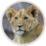 Lion Cub Close Up Round Beach Towel