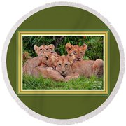 Lion Cubs. L A With Decorative Ornate Printed Frame. Round Beach Towel
