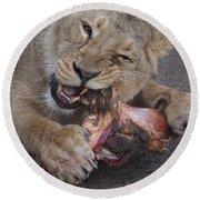 Lion Eating Round Beach Towel