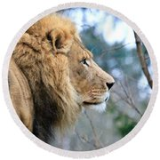 Lion In Thought Round Beach Towel