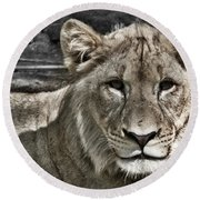Lion Portrait Round Beach Towel