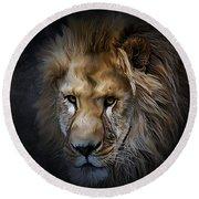 Lion Portraits 0055 Round Beach Towel