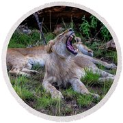 Lion Roar/2 Round Beach Towel