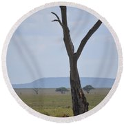 Lion Under Tree Round Beach Towel