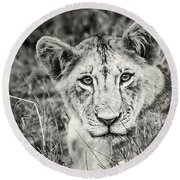 Lioness Portrait Round Beach Towel
