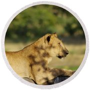 Lioness Pose Round Beach Towel