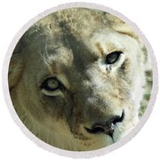 Lioness Up Close Round Beach Towel