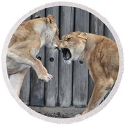 Lioness's Playing 1 Round Beach Towel