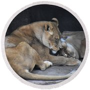 Lioness's Playing 2 Round Beach Towel